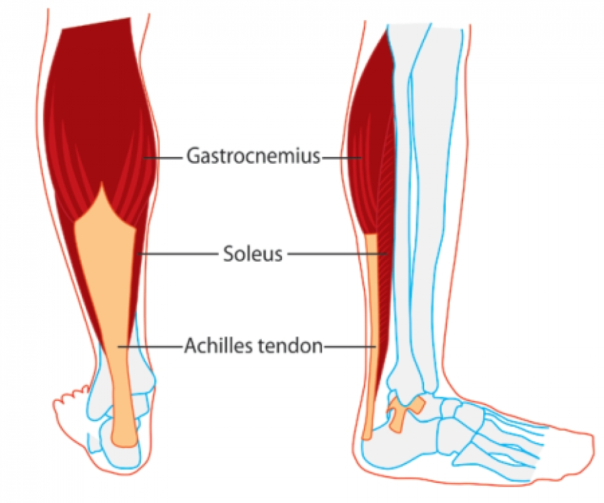 The Runner's 'Soul'...SOLEUS